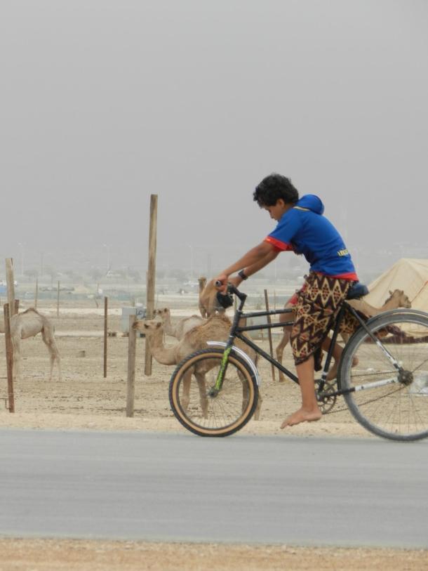 biking on the plain instead of the mountains, copyr. MDK