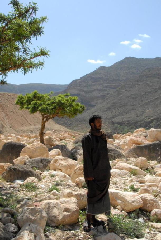 Frankincense trees only grow in arid environments