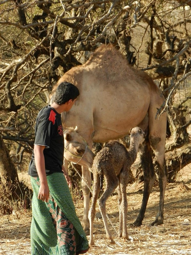 in Dhofar one can find three lifestyle groups