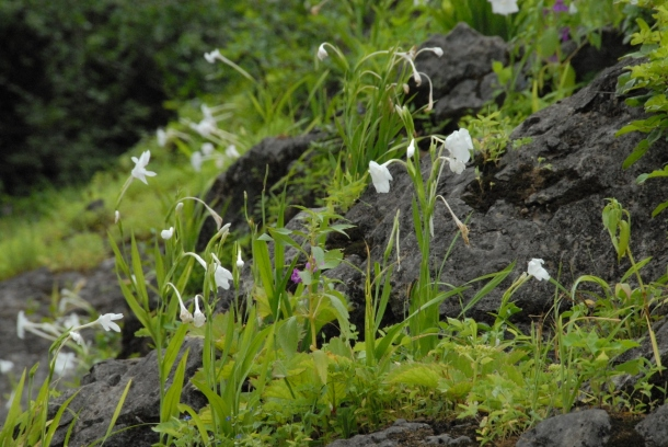 flower power in the green mountains ( Al Qara mountain)