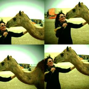 Talks of the Camel (part2)