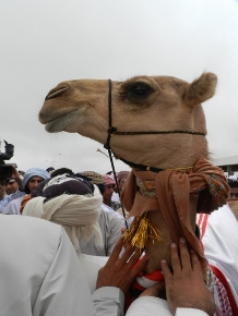 Talks of the Camel (part5)