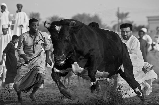 Run Away, Hamad Albusaidi