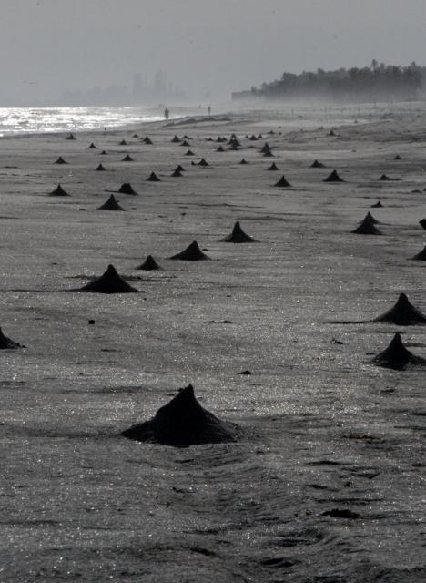 Pyramides on the beach, made by male ghost crabs or Ocypode Saratan Dahariz beach, Salalah-Dhofar (copyr.alarba)