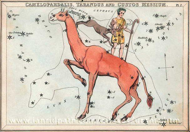 Camelopardalis, the giraffe copyr Ian Ridpath