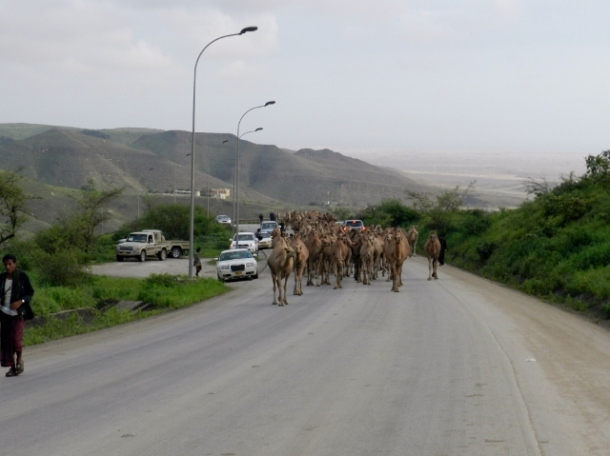The camels and their owners, who stayed down at the foothills along the shores, slowly turn back to the villages in the mountains.