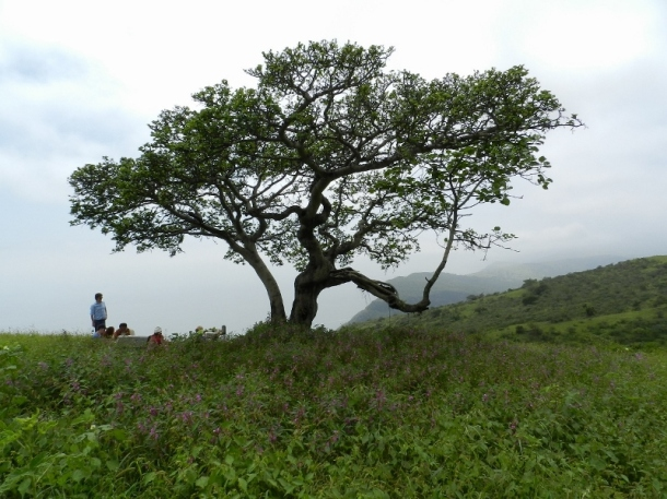 Khareef delights, with the annual Salalah Tourism Festival