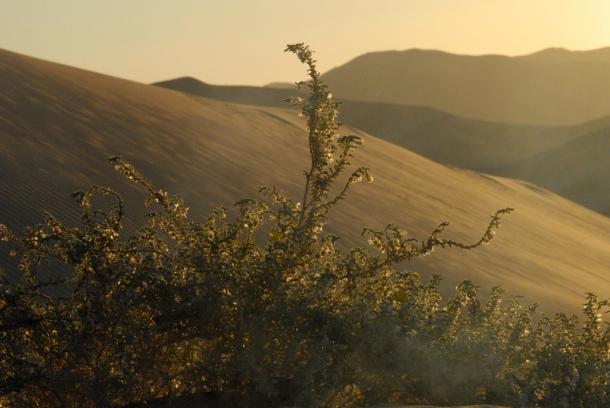 life in the desert 1 (1024x685)
